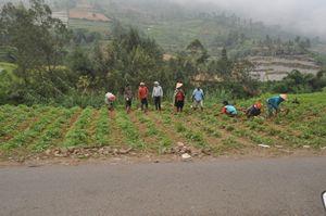 Farmer in Wonosobo - Java