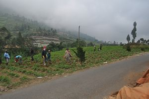 Javanese farmer in Wonosobo