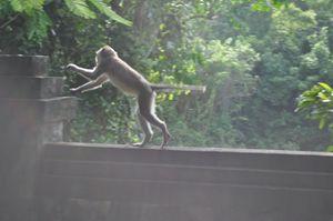 Padang-padang monkey - Kwazen Gallery