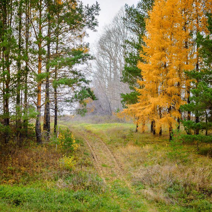 Autumn landscape - Photo