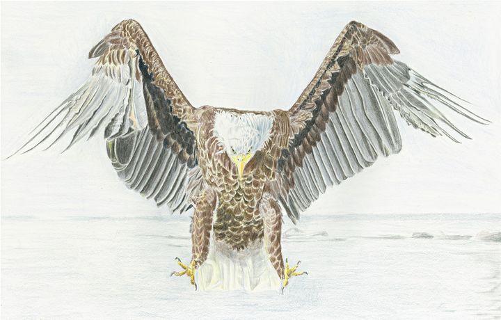Bald Eagle - M. Scott Spence Fine Art & Illustration