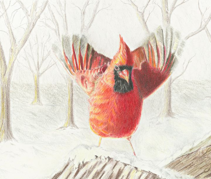 Cardinal - M. Scott Spence Fine Art & Illustration