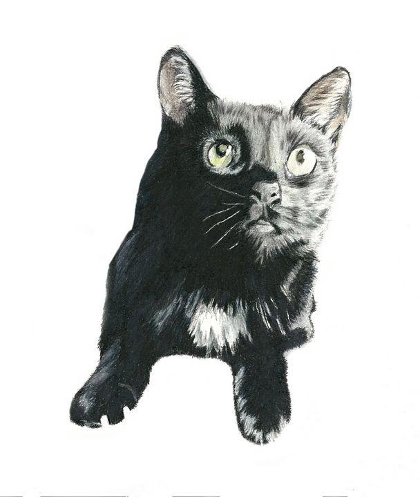 Ari - M. Scott Spence Fine Art & Illustration