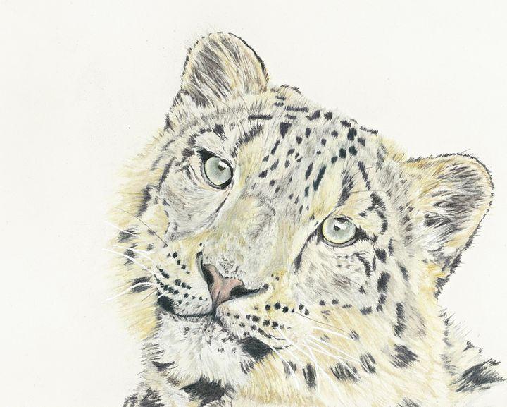 Snow Leopard - M. Scott Spence Fine Art & Illustration
