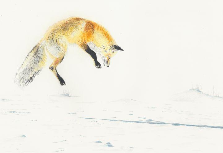 Fox - M. Scott Spence Fine Art & Illustration