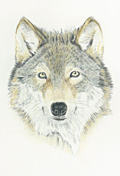 Gray Wolf - M. Scott Spence Fine Art & Illustration