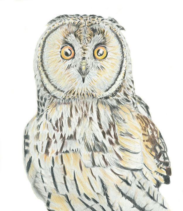 Shorteared Owl - M. Scott Spence Fine Art & Illustration