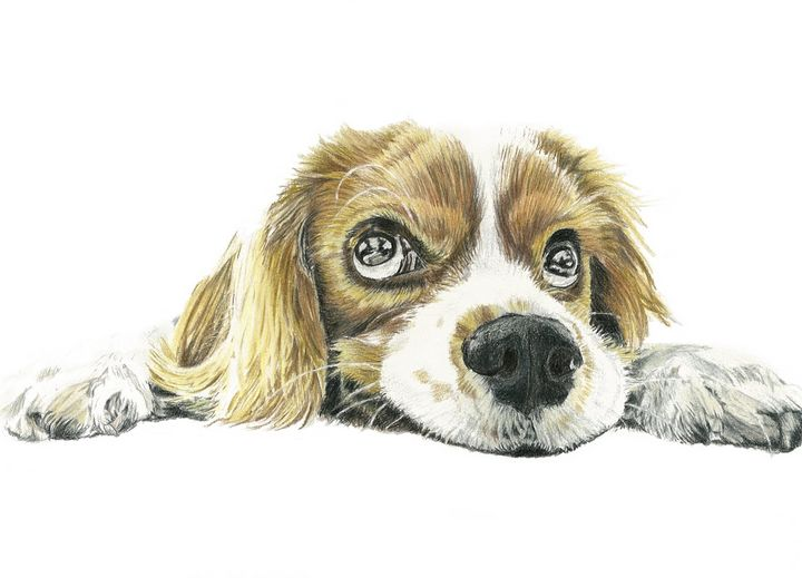 Puppy - M. Scott Spence Fine Art & Illustration