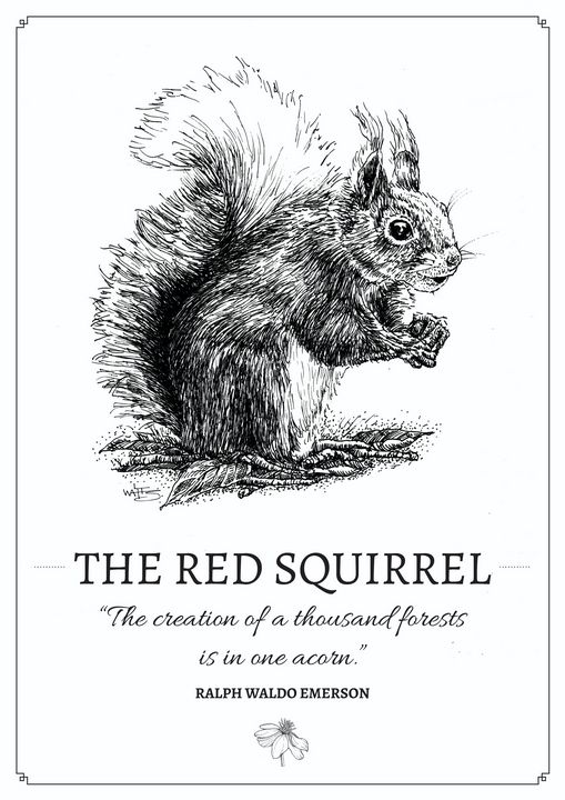 The Red Squirrel - Gnostic Forest Art