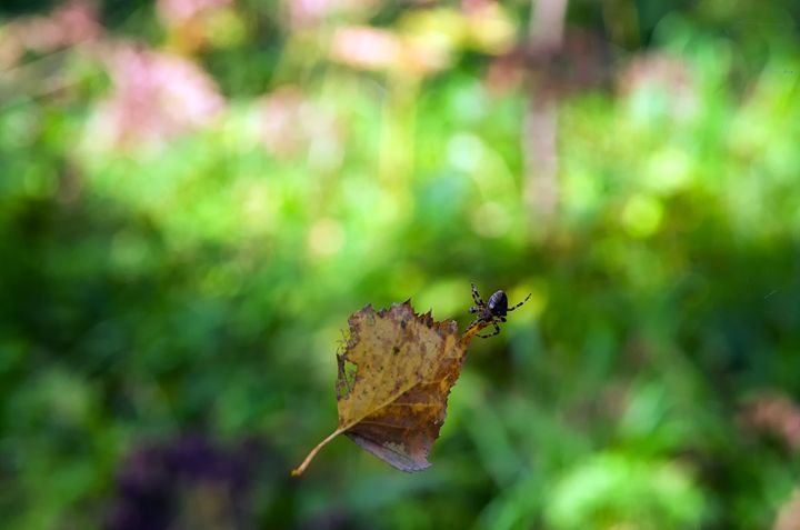 Leaf and spider - mnwind