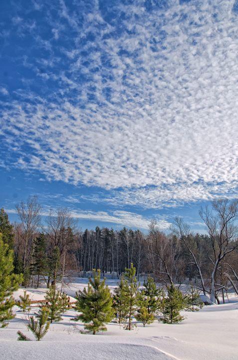 Winter. Field. Fence - mnwind