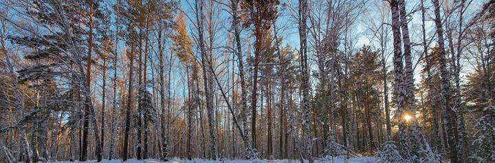 Winter. Forest. Sun - mnwind