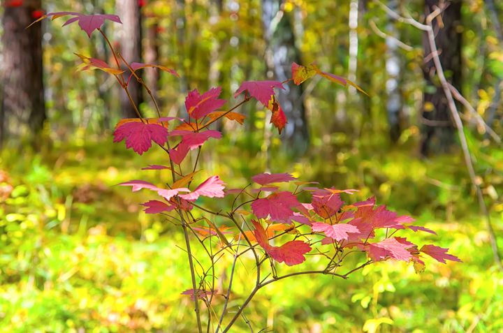 Fall. Forest. Leaves - mnwind