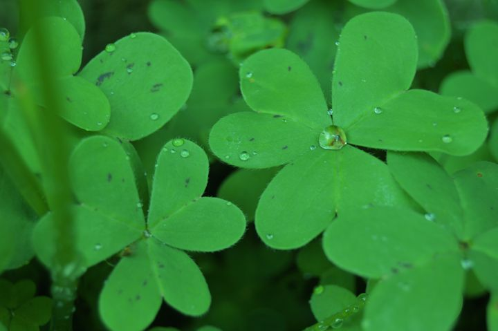 luck - Mandy Payne