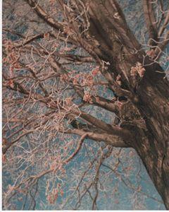 Jack Frost Kissed an Oak