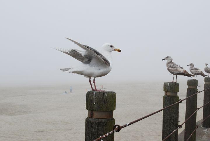 Landing and Standing - Rolf McEwen