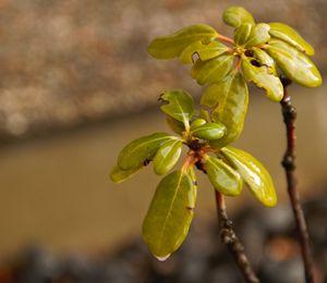 Glossy Plant