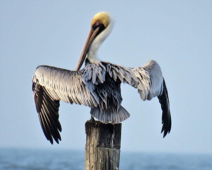 Pelican - RLKetner Kreations