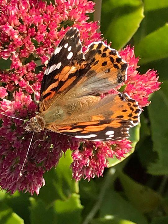 Flutter By - RLKetner Kreations