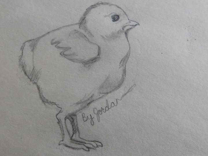 Ducky - Jordan