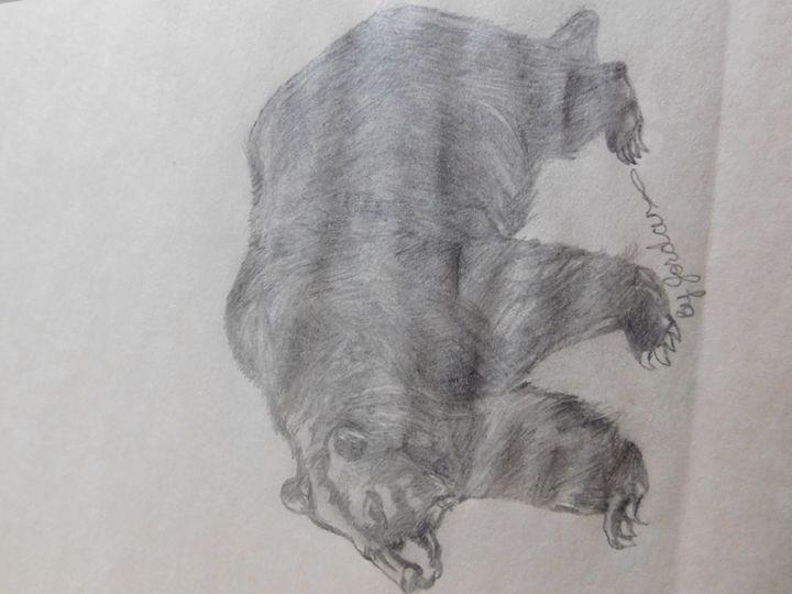 Bear - Jordan