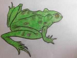 Frog - Jordan