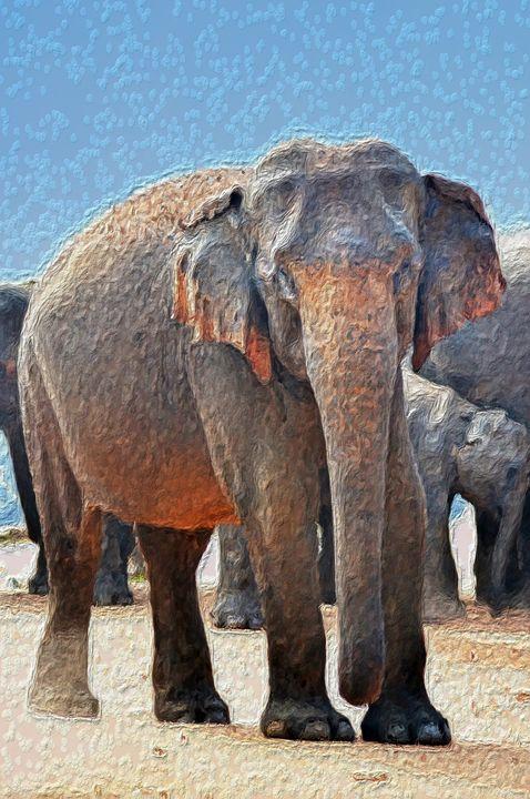 African Elephant - PrintArt.US