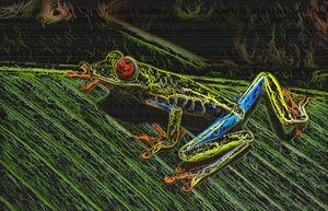 Colorful Frog on a Leaf.