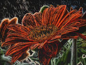 Orange Daisy on a Stem. - PrintArt.US