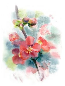 Red bright flowers of quince