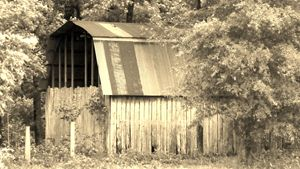 Born in a Barn - Arkansas as seen by me