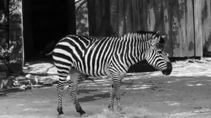 Zebra Camo - Arkansas as seen by me