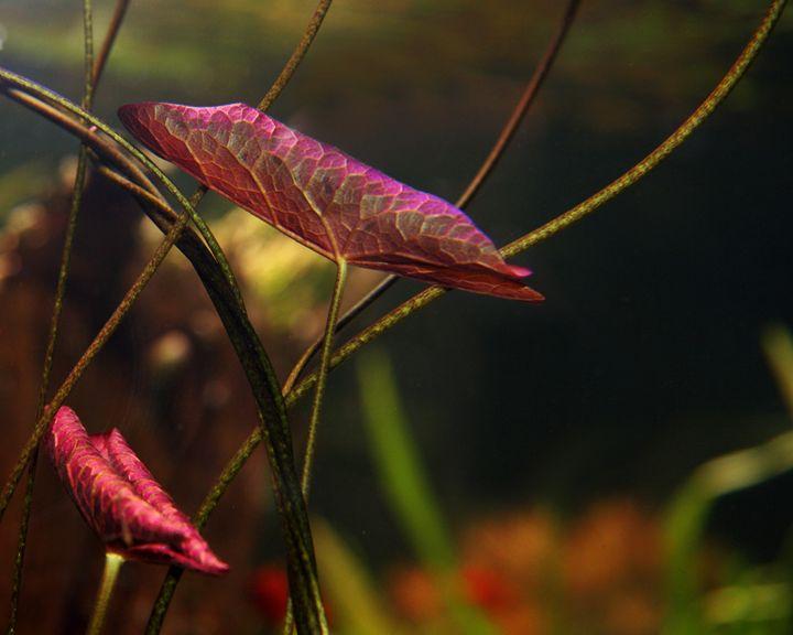 Underwater Plants - Sharon Nolan Photography
