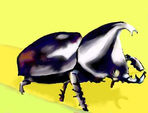 RHINO BEETLE - Keith Goldie