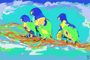 Parrots..FNQ