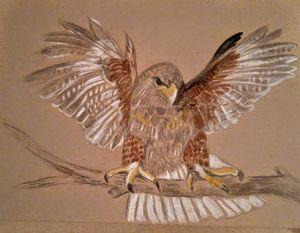 Bird of prey - JmurArt