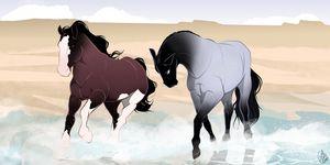 Horses on a Beach