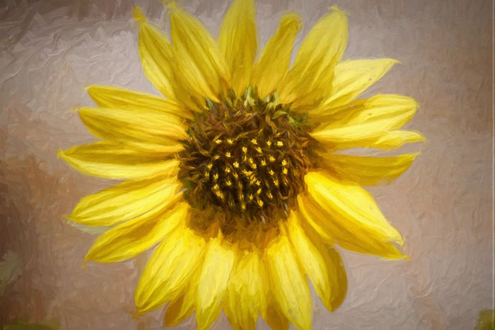 Sunflower - Artwork by Bobby Allan