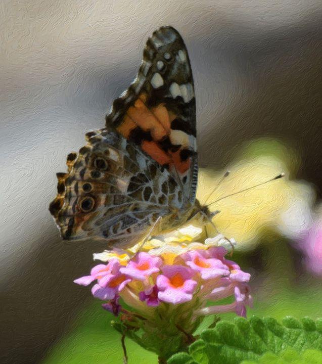 Butterfly - Artwork by Bobby Allan