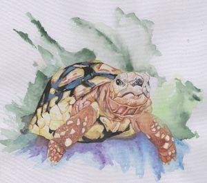 Turtlewave