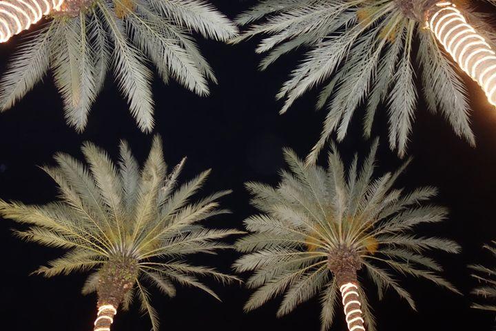 It's always x-mas in Miami - Marcia Treiger