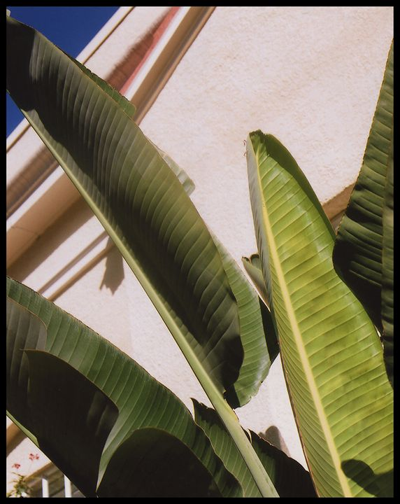 Protecting Palms - Marcia Treiger