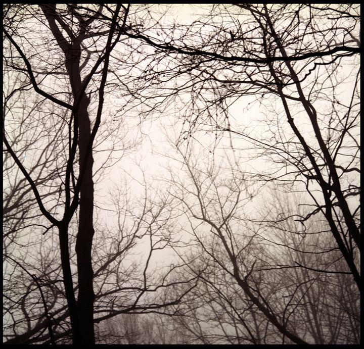 Winter 3 - Marcia Treiger
