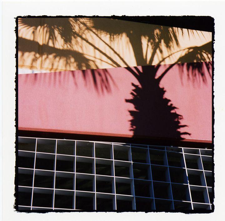 Palm Ghost - Marcia Treiger