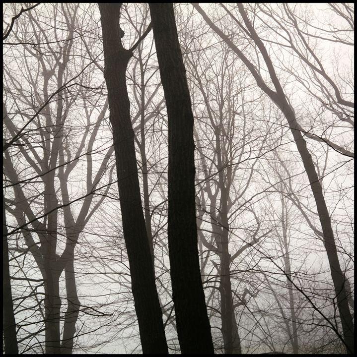 Winter 2 - Marcia Treiger