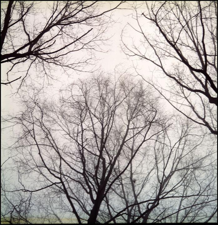 Winter 1 - Marcia Treiger