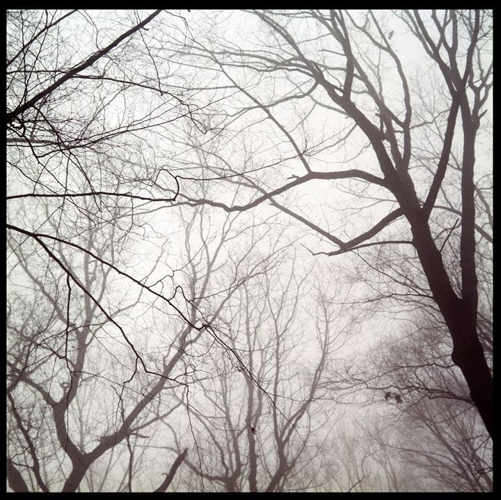 Winter in Gulph Mills - Marcia Treiger