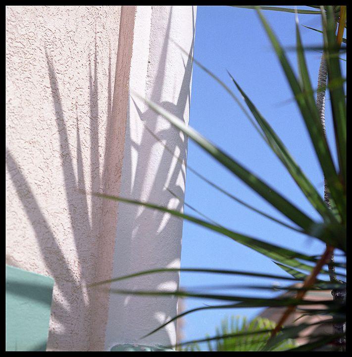 Pink Palm intervention - Marcia Treiger
