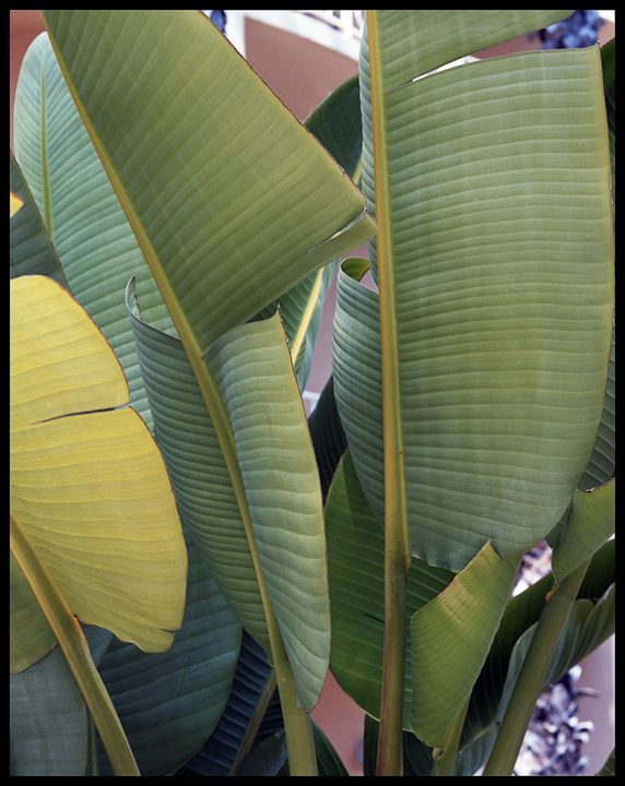 Palm Harmony - Marcia Treiger