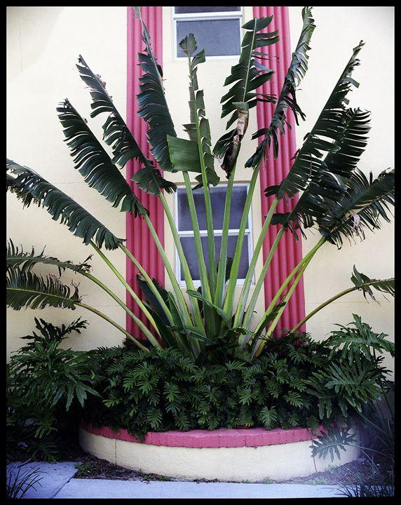 Palm Curtains - Marcia Treiger